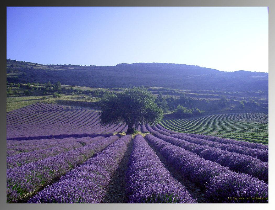 Le travail de Byron Katie : été 2012, dans le Sud de la France, ********** 7 Rendez-Vous avec Sylvie, entre Ombre et Lumière sous l'Arbre à Palabre, avec Vous ?