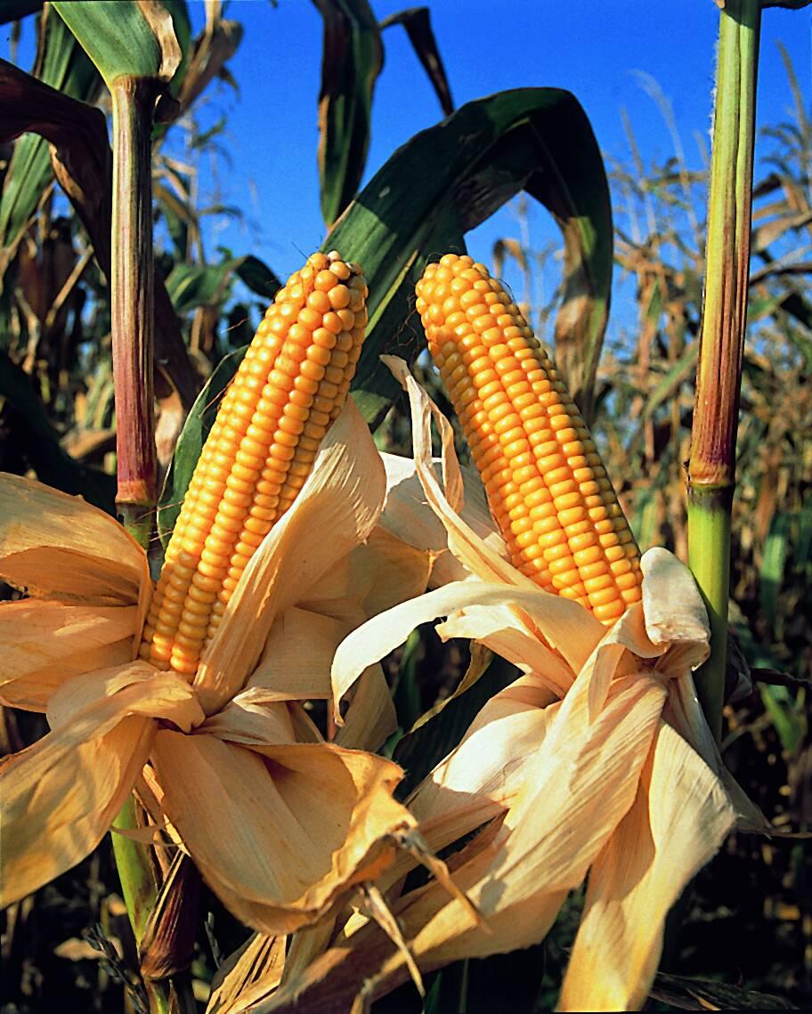 Monsanto et le Travail de Byron Katie, reprise des ateliers à PEYREHORADE
