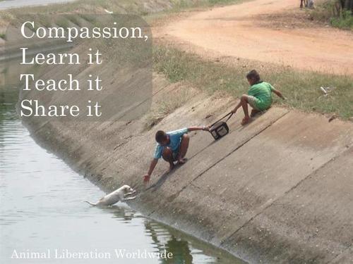Compassion-Share-It
