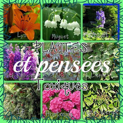 Plantes toxiques…Pensées toxiques…Quelle belle analogie !