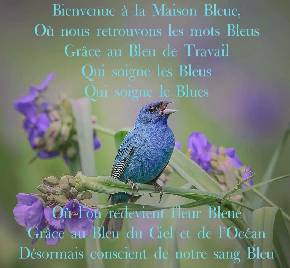 Le séjour Bleu à la Maison Bleue près du grand Bleu